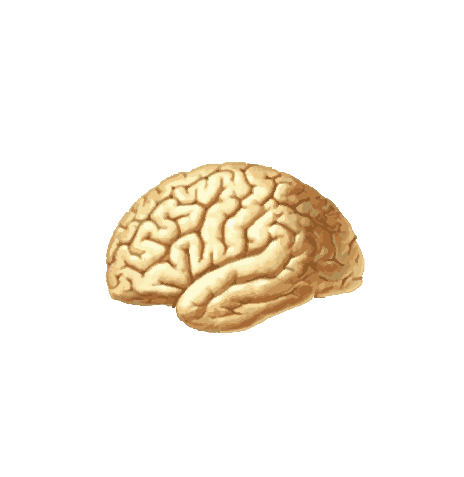 SEXNE